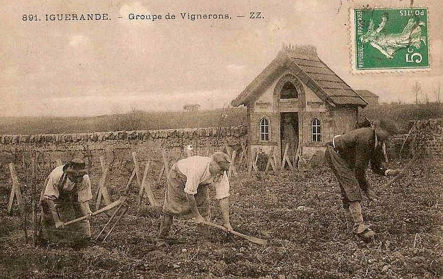 Groupe de vignerons à Iguerande
